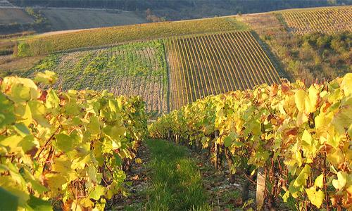 Alla scoperta dei vini del Lazio